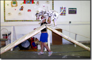 Dalmation at top of A-frame